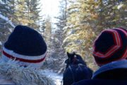 Private Banff sleigh ride with Banff Trail Riders