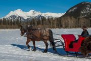 Snuggle under an authentic buffalo blanket on a private sleigh ride