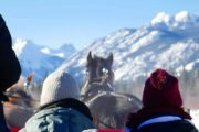 Take a Banff sleigh ride with Banff Trail Riders