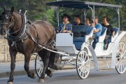Take a guided carriage ride through downtown Banff with Banff Trail Riders in the Canadian Rockies