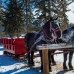 Take a magical banff winter sleigh ride