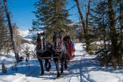 Take a winter sleigh ride in Banff through the mountain meadows