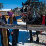 The horses love pats before or after your sleigh ride