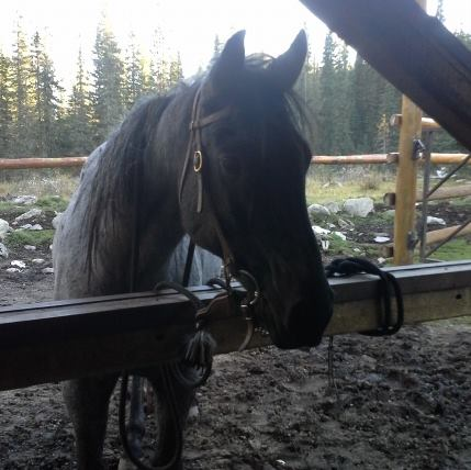 Banff Horseback Riding with Bluto Guide Horse