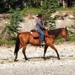 Banff Trail Riders CB Guest Horse