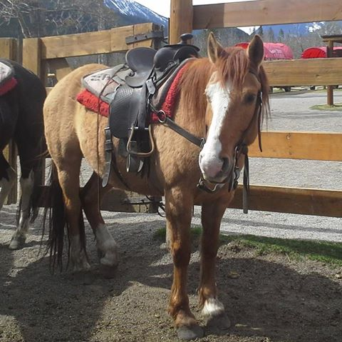 Banff Horseback Riding with Coyote Guest Horse
