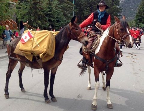 Banff Horseback Rides with Daisy Packer and Rider Mule