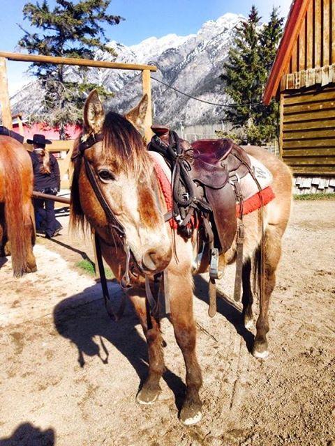 Banff Horseback Rides with Denver Guest Horse
