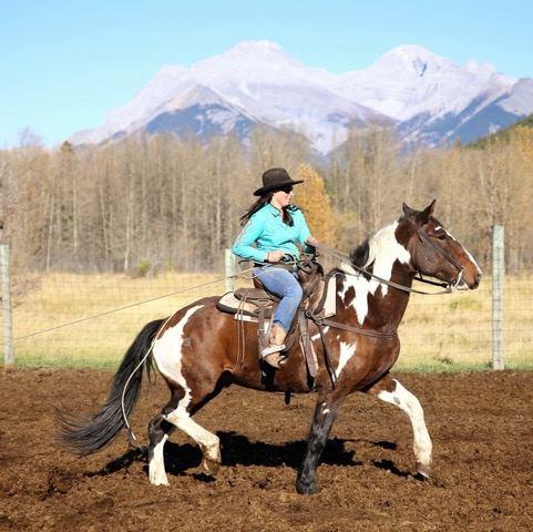 Banff Trail Riders Dutch Guest Horse