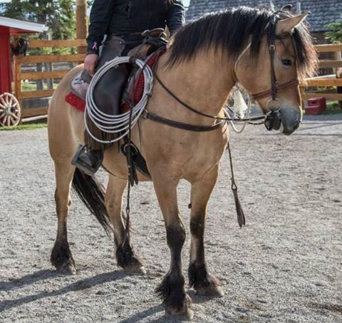 Banff Horseback Rides with Freddy Guest Horse