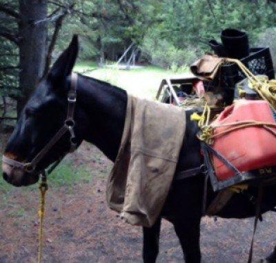 Banff Horseback - Hank