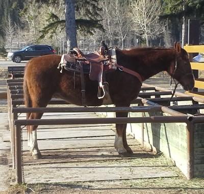 Banff Horseback Rides with Harvey