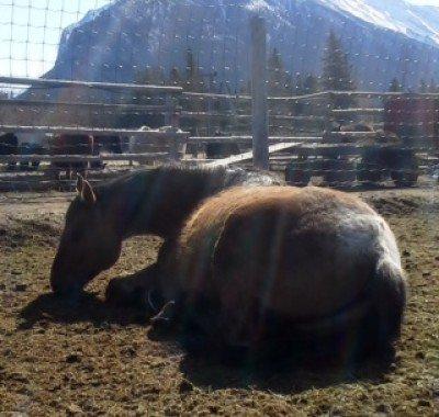Banff Horseback - Manny