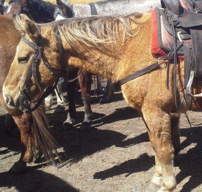 Banff Horseback Rides with Marshall