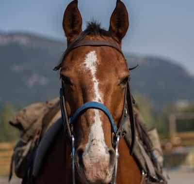 Max Guest Horse