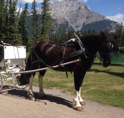 Banff Horseback Rides with Ned