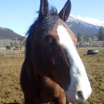 Banff Horseback Riding with Norquay Cooks Horse