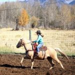 Banff Trail Riders Ozzy Guide Horse