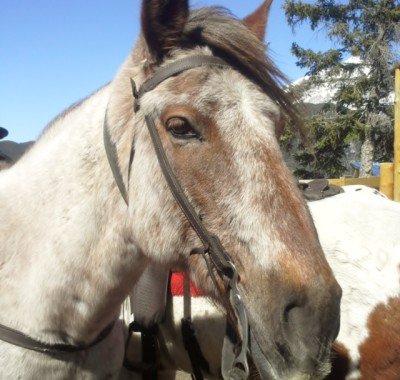 Banff Horseback Rides with Peyto