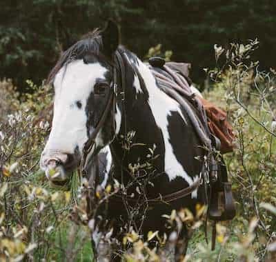 Posse Guest Horse