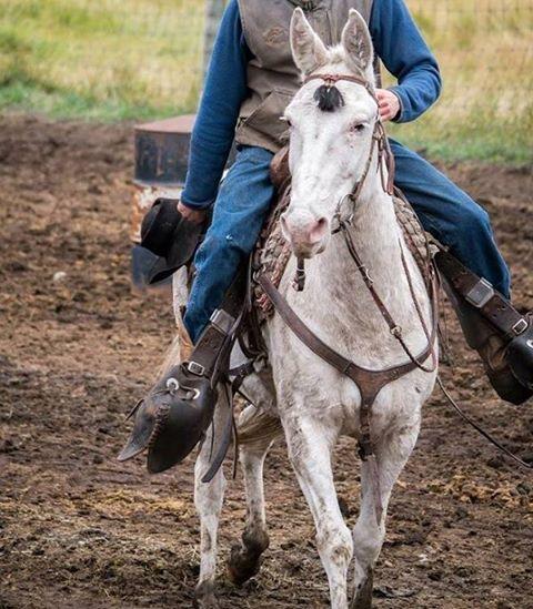 Banff Trail Riders Ritchie Packer Mule