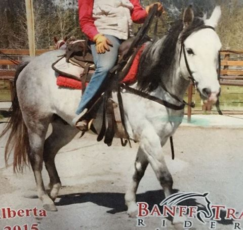 Banff Trail Riders Shades Guest Horse In Training