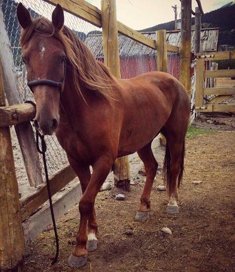 Banff Trail Riders Sleeman Guest Horse
