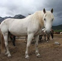 Banff Horseback Rides with Snoopy Guest Horse