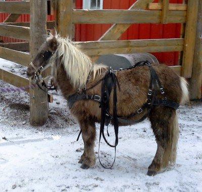 Banff Horseback Rides with Studley