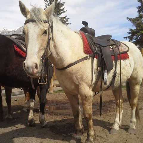 Banff Horseback Riding with Sulphur Guest Horse