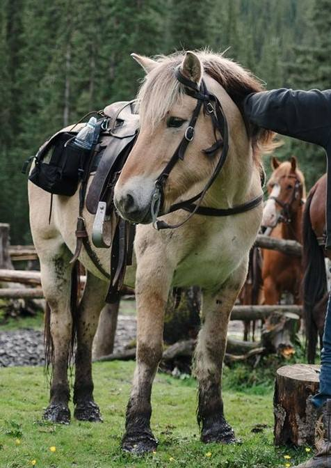 Banff Horseback Rides with Titan Norwegian Fjord