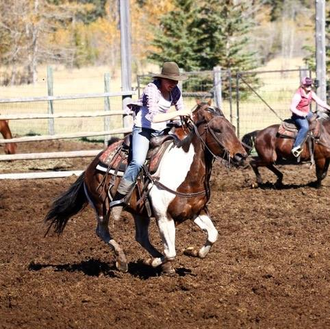 Banff Trail Riders Twister Guest Horse