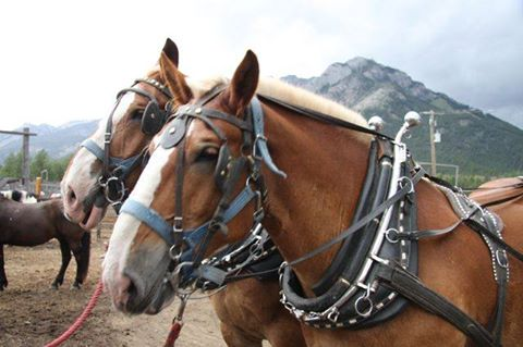 Banff Horseback Rides with Wayne Sleigh Horse