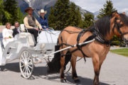 Wedding Carriage Ride in Banff, Canadian Rockies with Banff Trail Riders