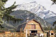 Warner Stables, Banff Horseback Rides