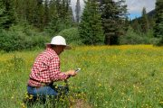 Take Flower Photos on the Cascade Valley Backcountry Tent Trip with Banff Trail Riders in the Canadian Rockies