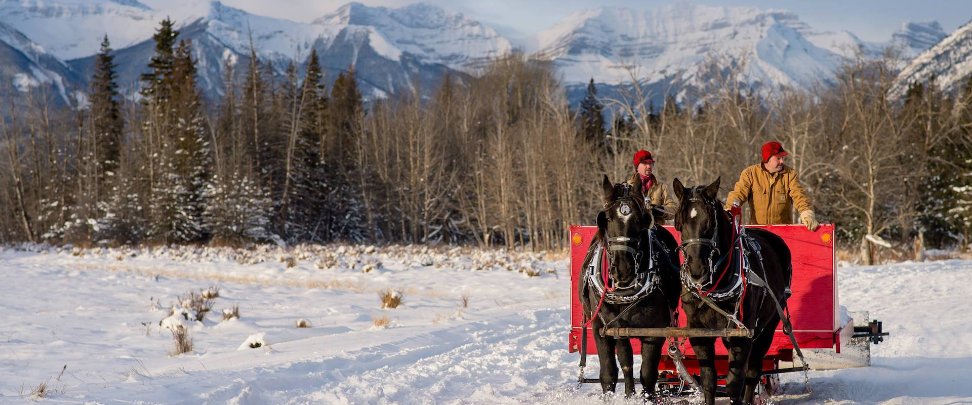 Sleigh Ride at the Banff Christmas Market with Banff Trail Riders