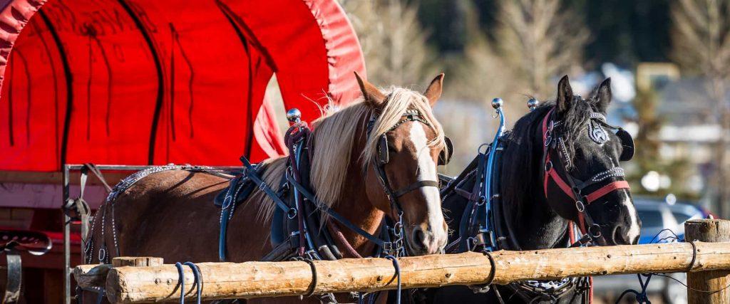 Take a free wagon ride this holiday season with Banff Trail Riders
