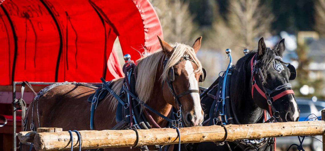 Take a free wagon ride this holiday season with Banff Trail Riders