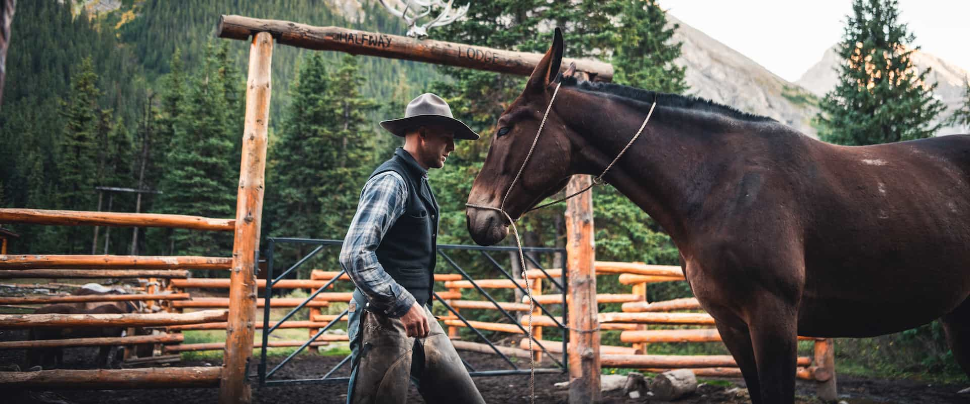 The Bond Between Horse And Rider Banff Trail Riders