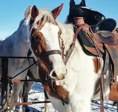 Trigger Guest Horse