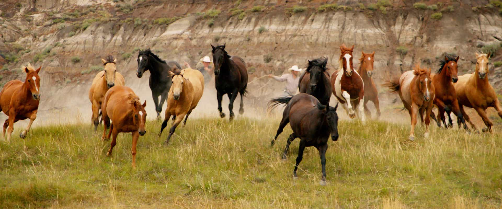 Wild horses in Alberta